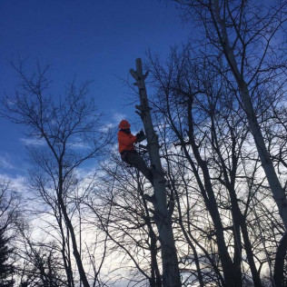 tree work Owatonna and Faribault, MN